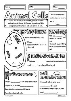 Structure of an Animal Cell Doodle Sheet Visual Guided