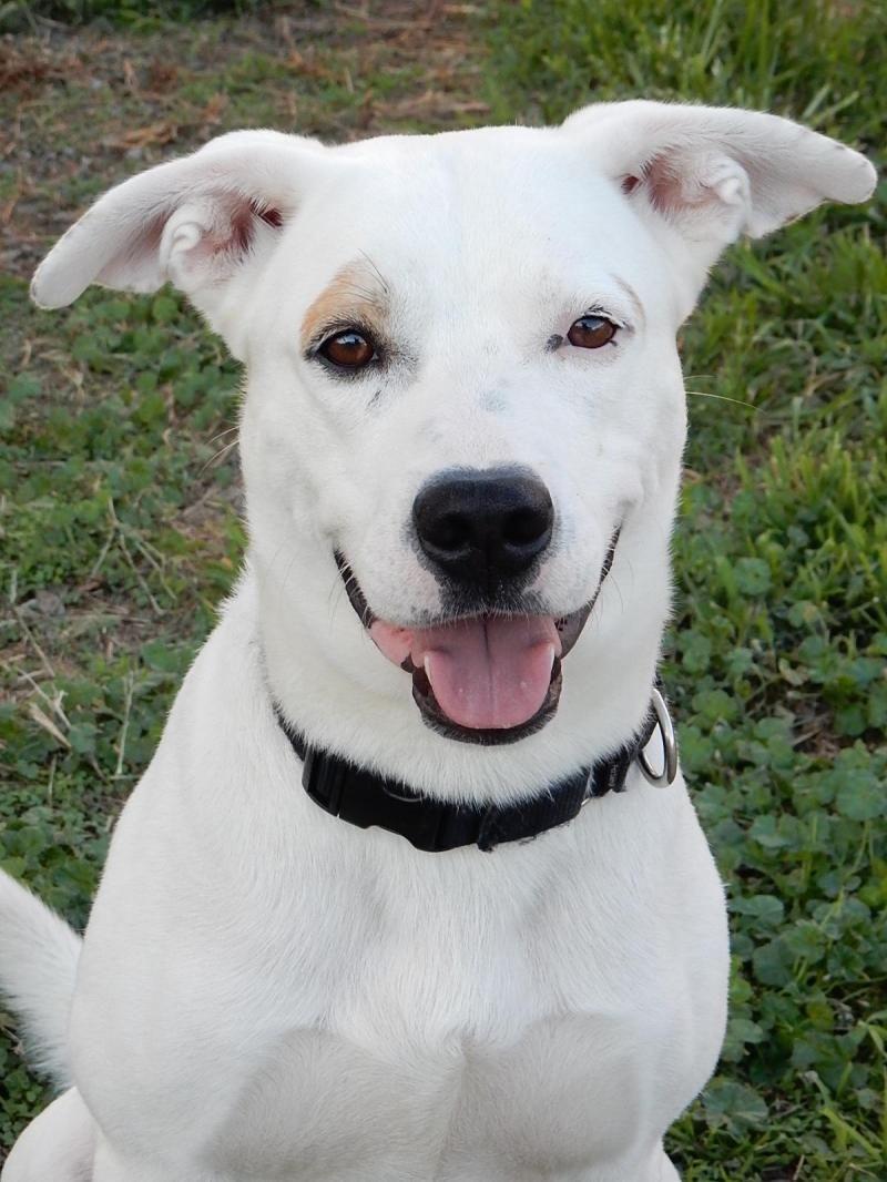 Adopt Ziggy on Pets, Pet adoption, Shelter dogs