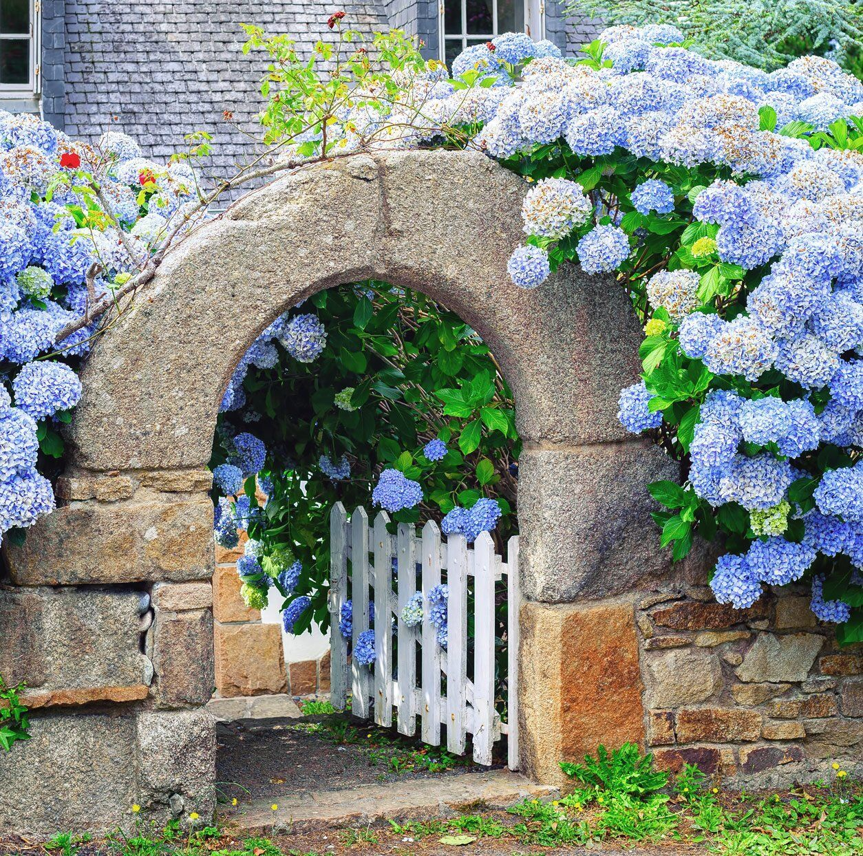 How To Stop Your Hydrangea Blooms From Turning Brown According To A Gardening Expert In 2020 White Gardens Garden Design Blue Hydrangea Flowers