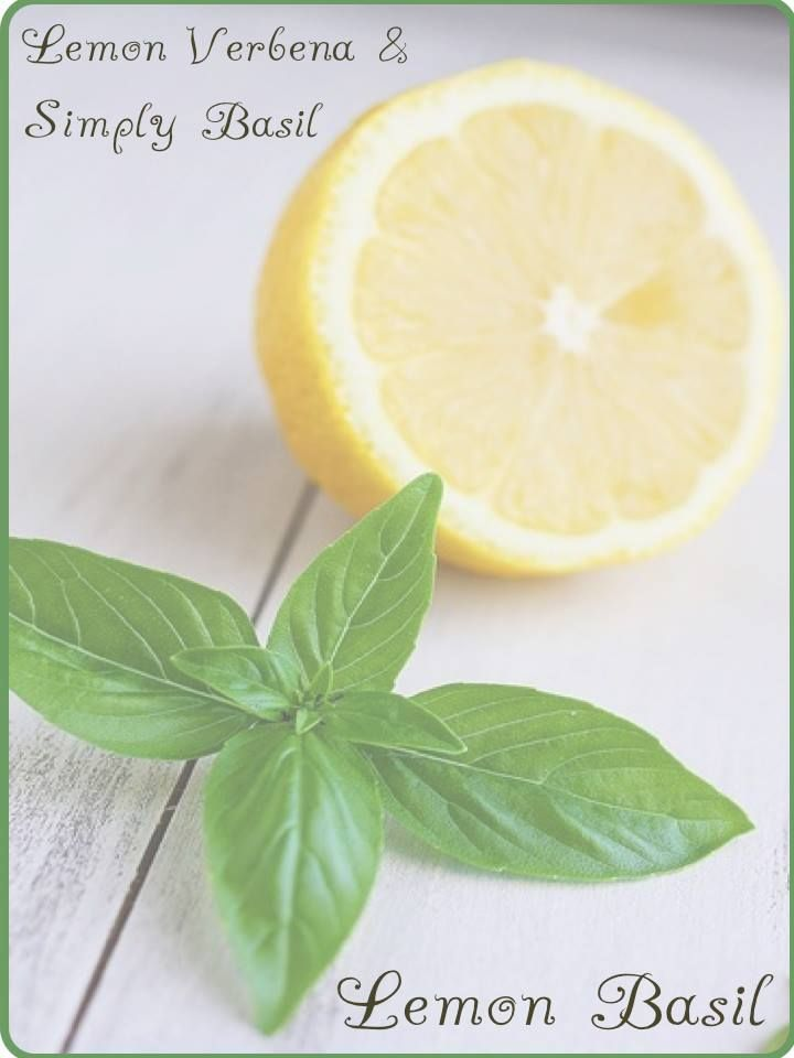 Scentsy Mixology - Lemon Basil  Stock up now at www.laborde.scentsy.us