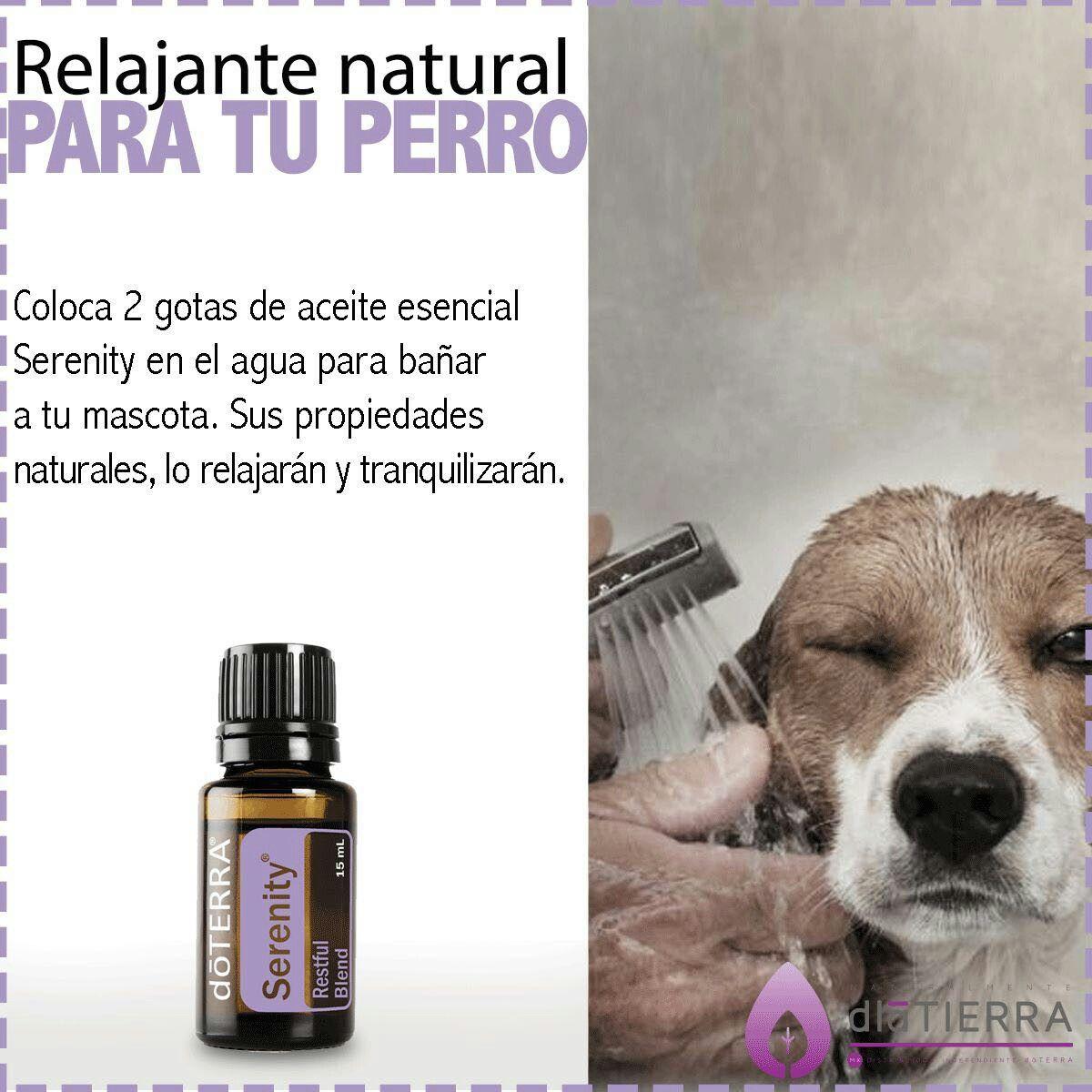 Relajante Para Tu Perro Aceites Esenciales Perros Recetas De Aceites Esenciales Aceites Esenciales Doterra