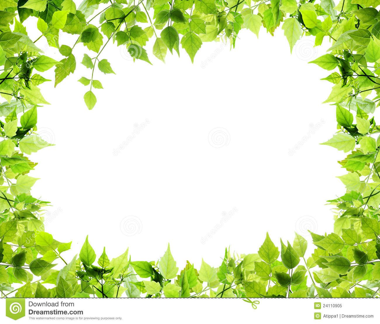 Natural Leaves Border Stock Image Image Of Floral Decorate 24110905 Leaf Nature Leaf Border Leaf Images