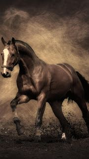Best Hd Horses Wallpapers For Iphone 5 Horse Wallpaper Horses Horse Painting