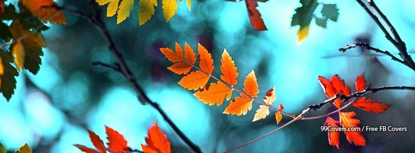 Autumn Leaves Background 18 Facebook Covers