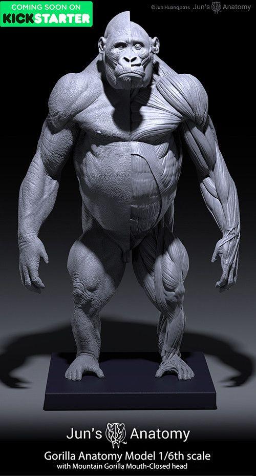 Gorilla Anatomy Models, Jun Huang on ArtStation at https://www ...