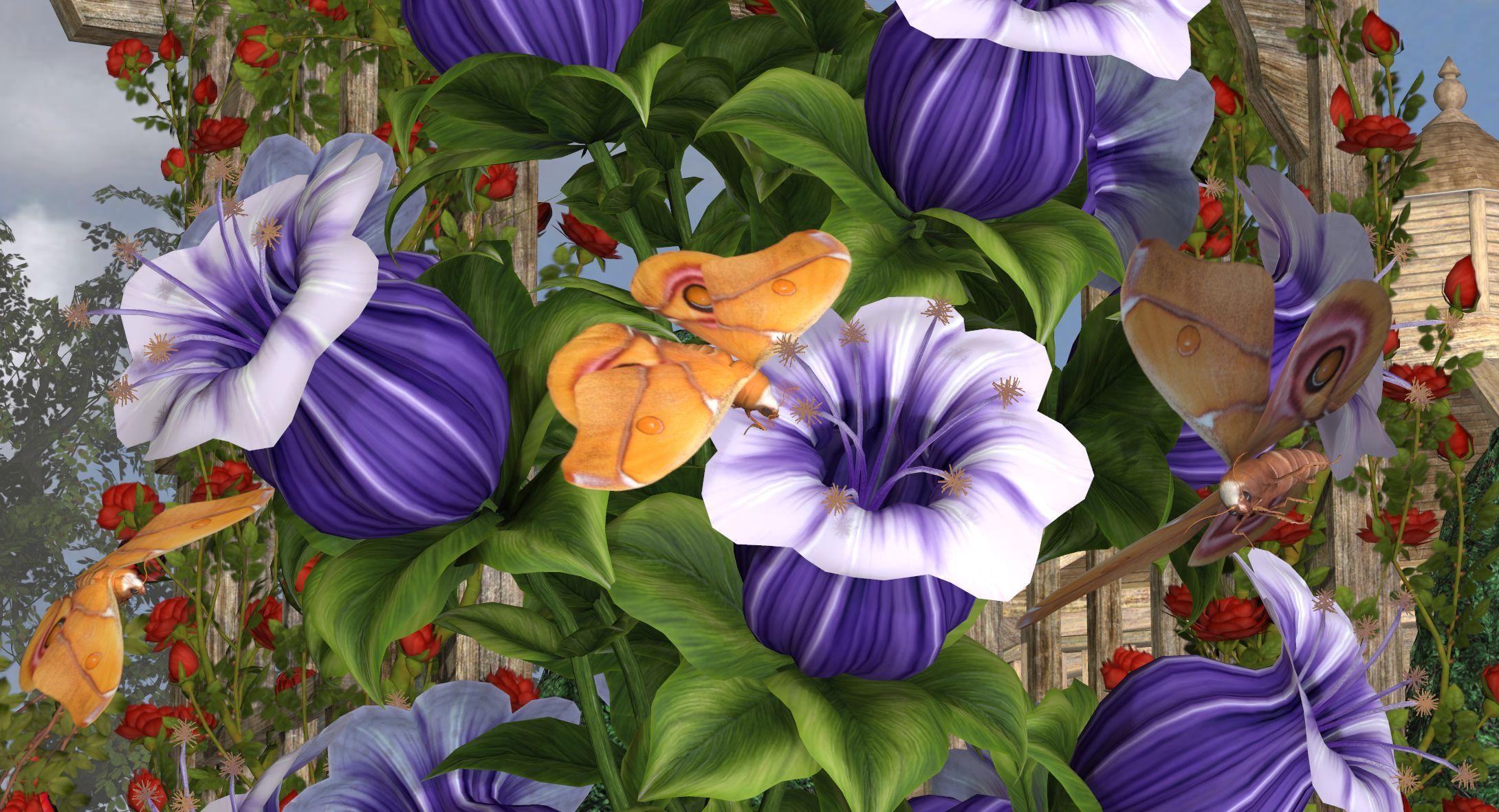 Sukura Silk Moths