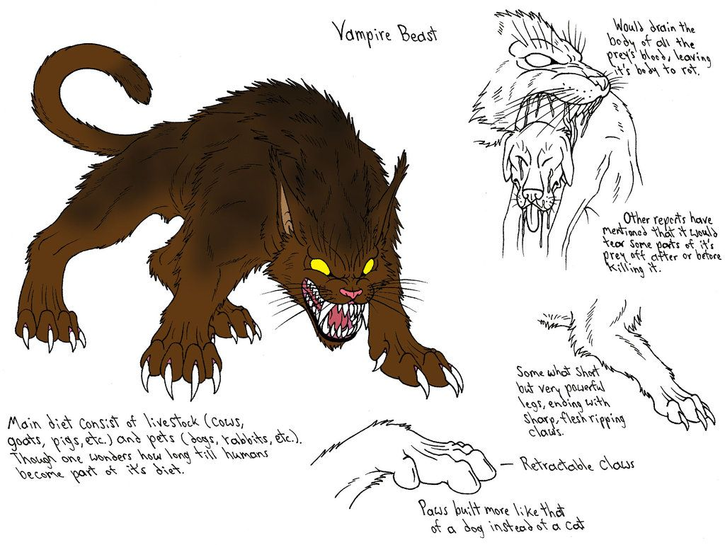 Vampire Beast This Feline Monster Attacked The Animals And Pets