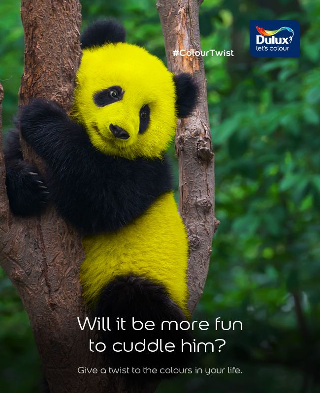 Do You Think A Yellow Colored Panda Is Looking More Cuter Share With Us What Else You Would Like To See In A Different Colour Cute Panda Baby Panda Cute Panda
