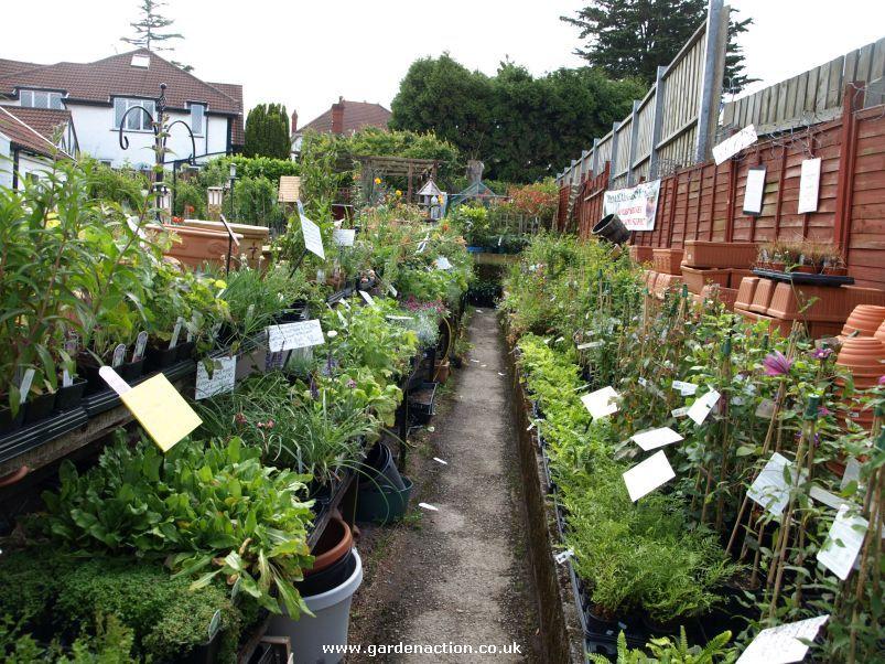 garden shop. Garden Shop Spitting