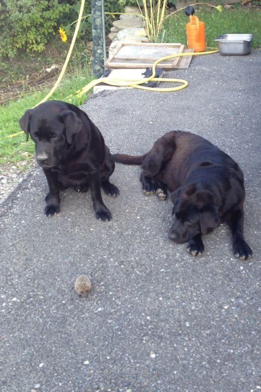 Toby e Spike con il loro nuovo amico