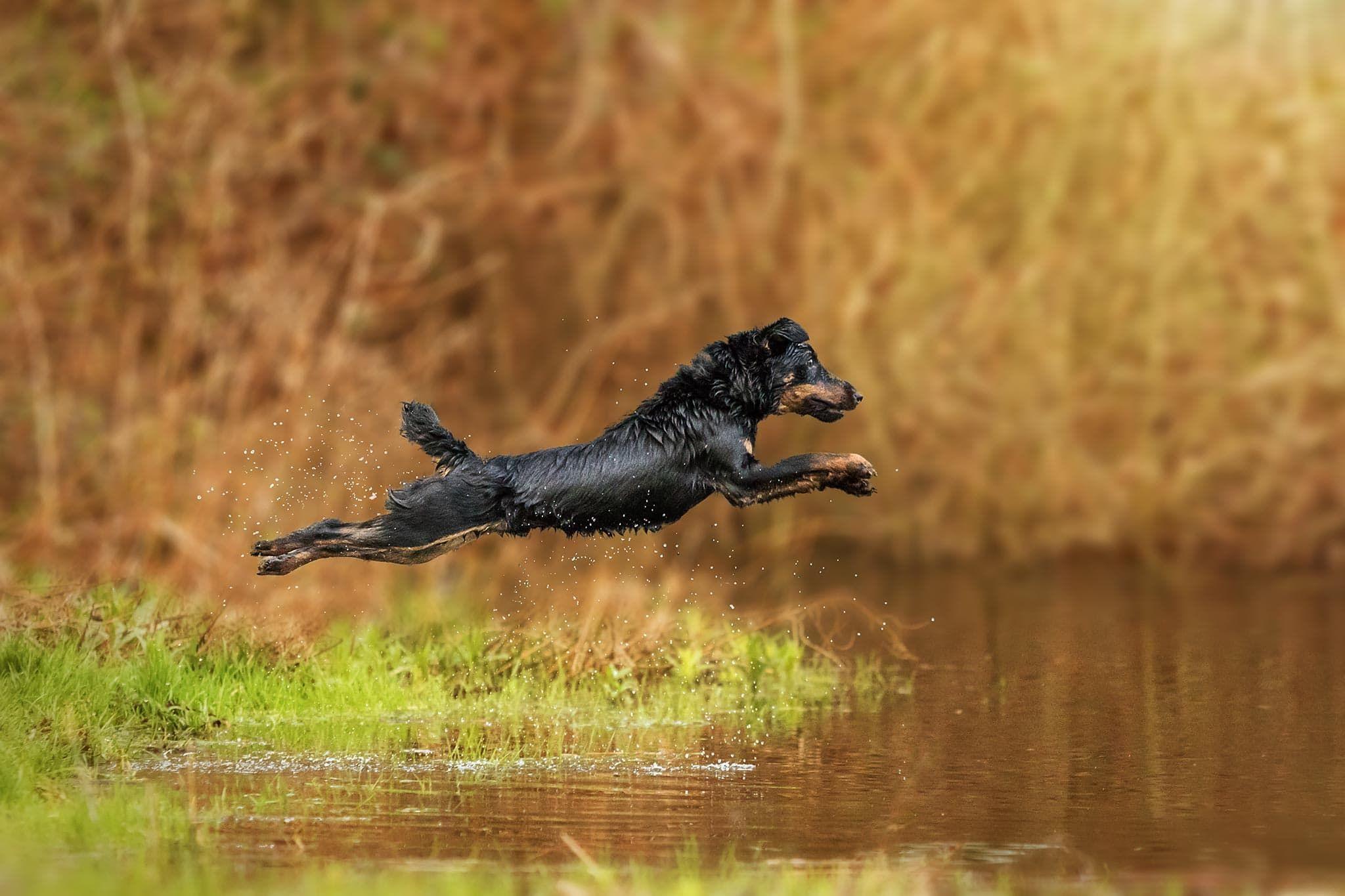 Hundefotografie Potsdam Sophia Zoike Photography Hundefotografie Hunde Patterdale Terrier