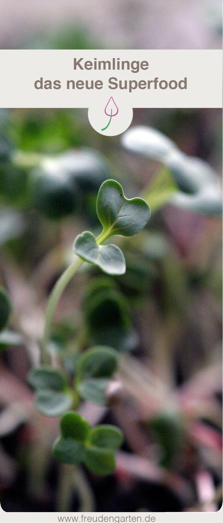 Keimlinge Zu Hause Selber Ziehen Eine Anleitung Keimling Pflanzen Sprossen