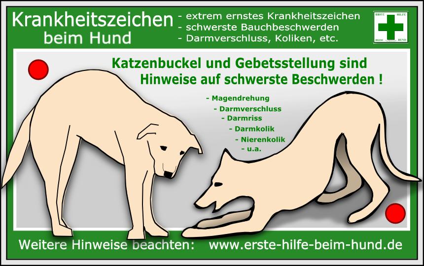NotfallSymptome Hunde, Hunde körpersprache und Gesunde