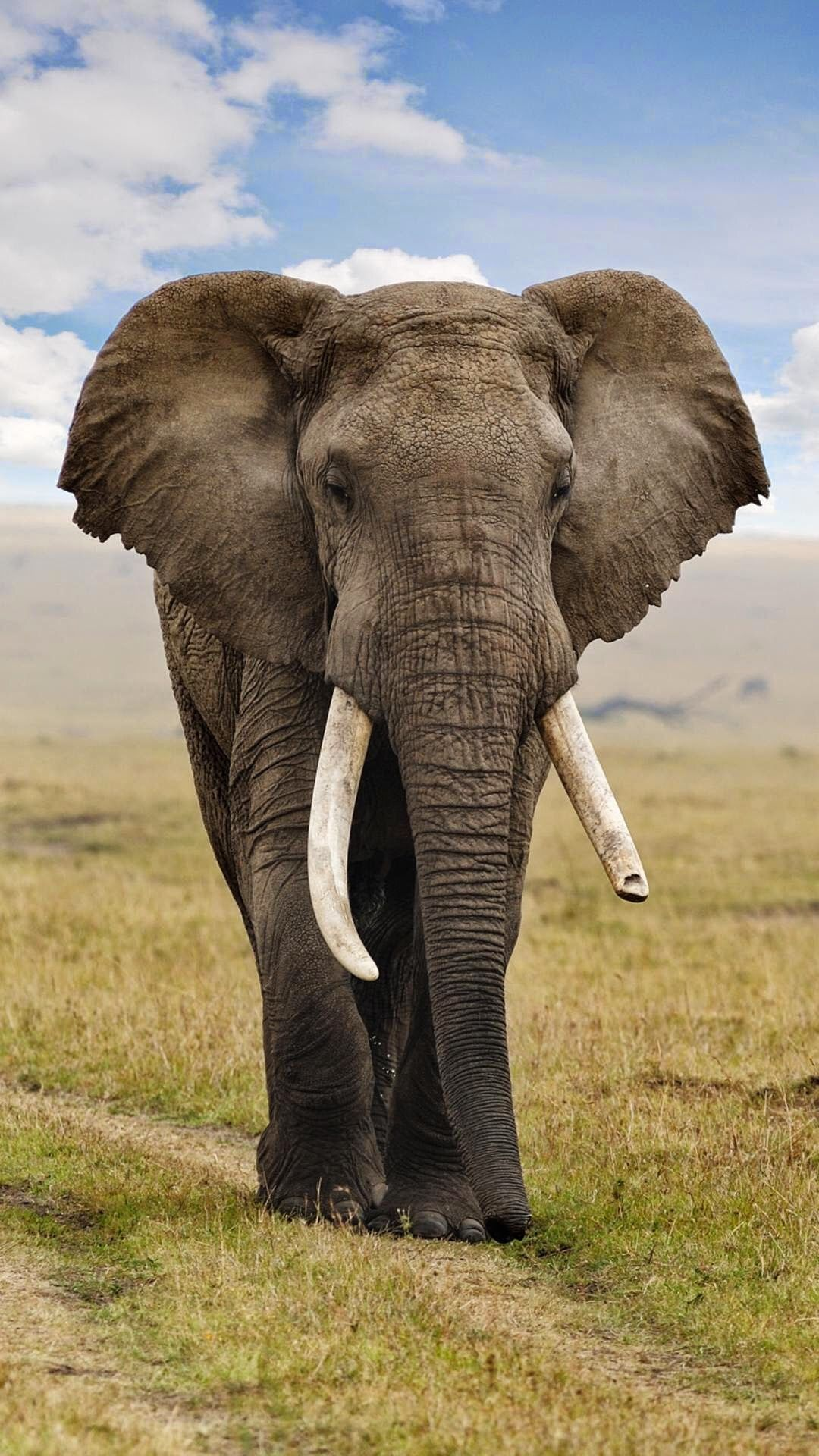 Baby Elephant Animals Wallpapers Ideas In 2020 Elefanten Fotos Elefanten Tapete Elefanten