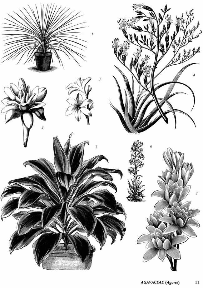 Welcome to Dover Publications: Plants: 2,400 Royalty-Free