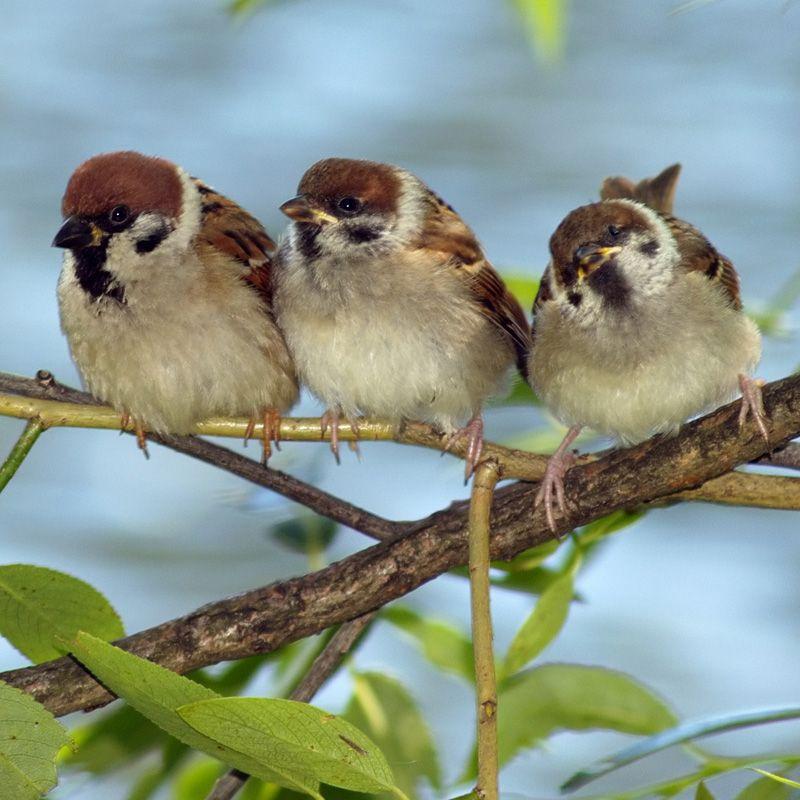 Een samenwerking van voedingsdeskundigen, wetenschappers en vogelliefhebbers