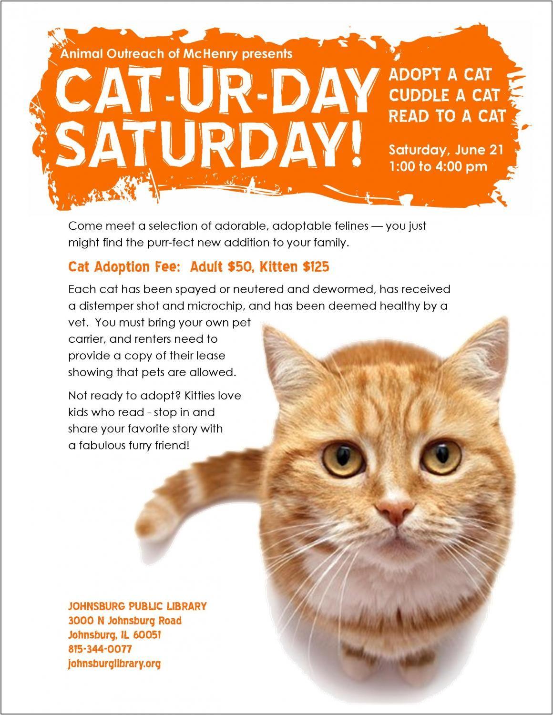 Adopt A Cat Event Johnsburg Public Library District Cat Adoption Cat Reading Adoption