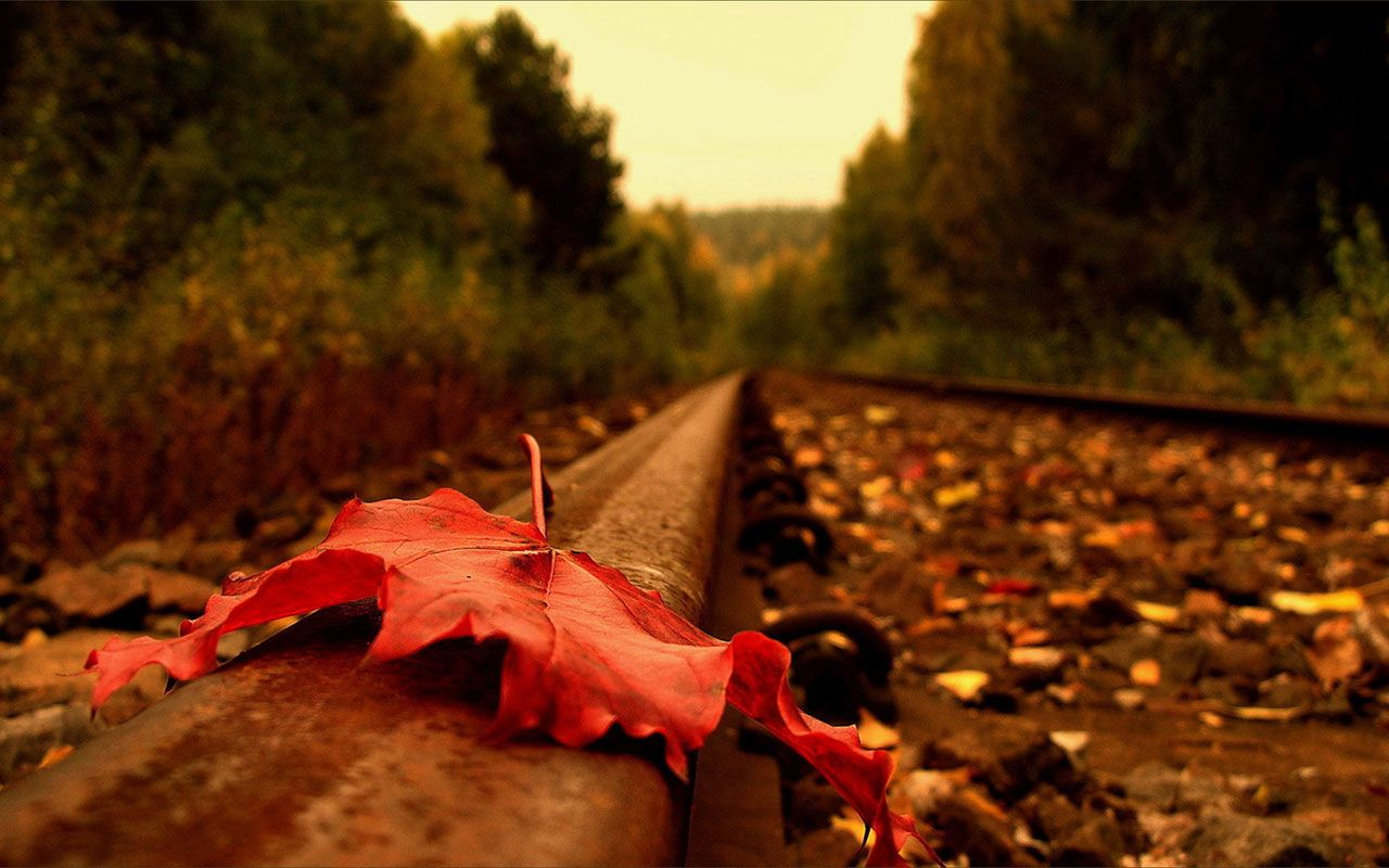 Romantic And Beautiful Autumn Leaves Photography Wallpaper 7