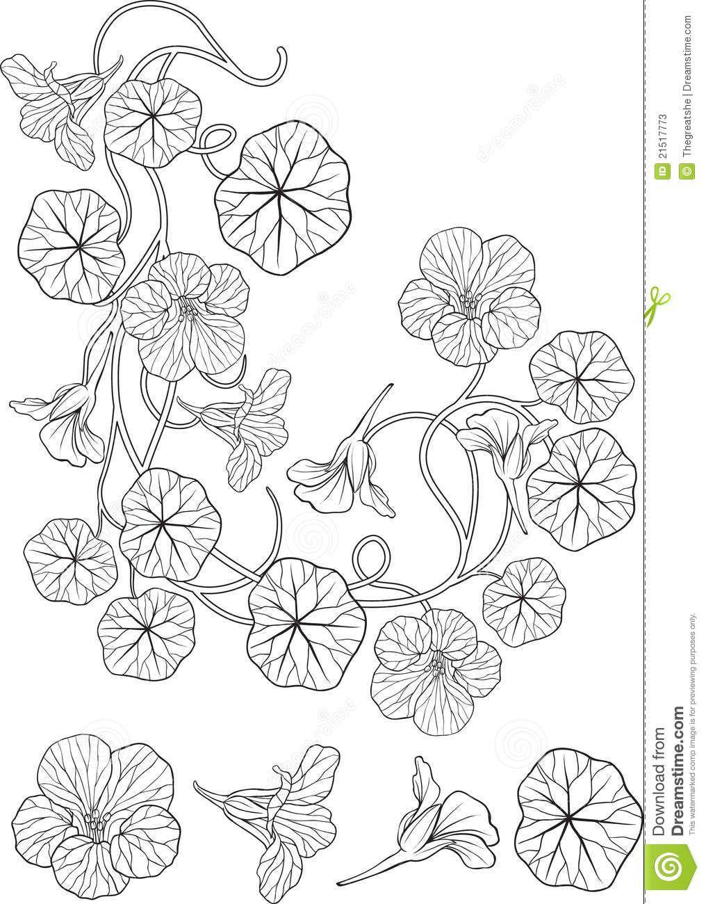 Art Nouveau Flower Tattoo Gis: Nasturtium Flower Art Nouveau Style Tattoo Stock Photos