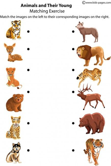 kids pages animals and their young k i d s animal worksheets worksheets for kids en. Black Bedroom Furniture Sets. Home Design Ideas
