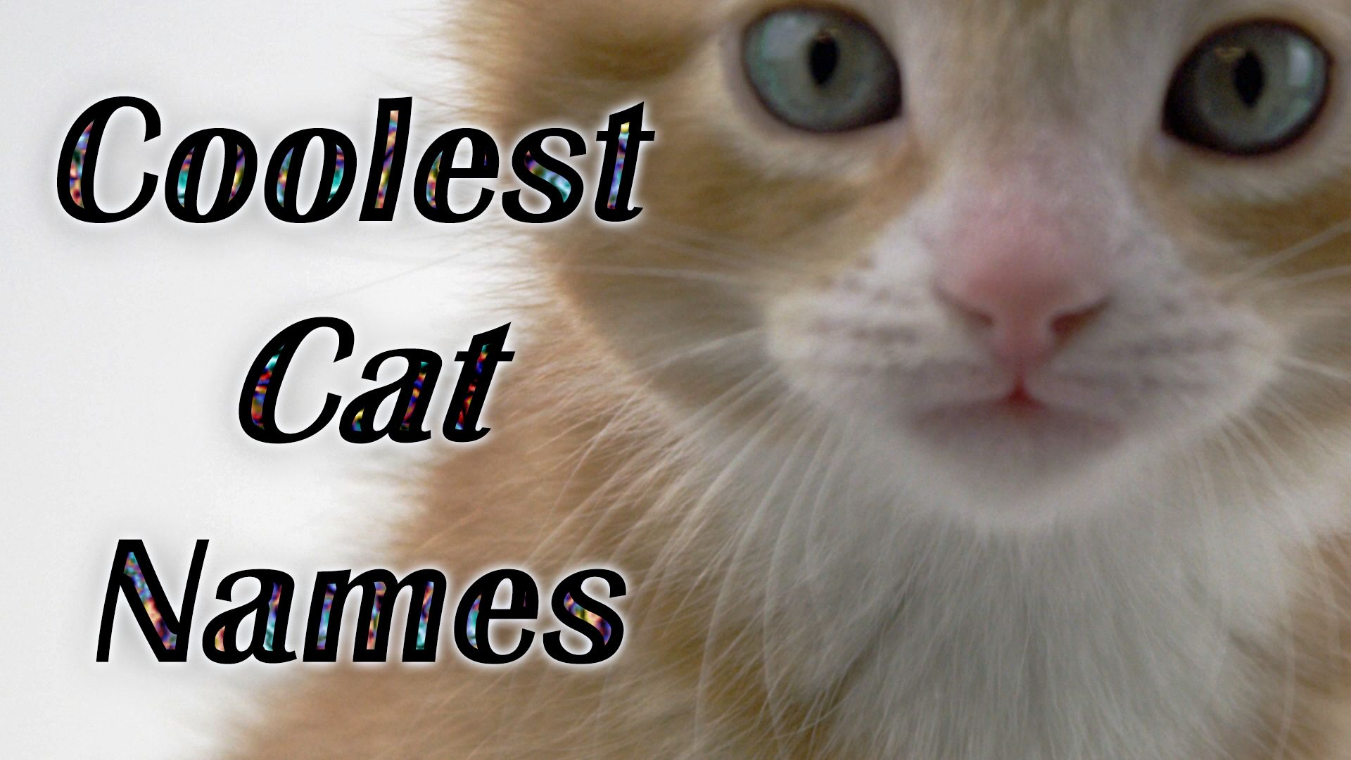VOTE FOR YOUR FAVORITE CAT NAME OR JUST WATCH THE CUTE