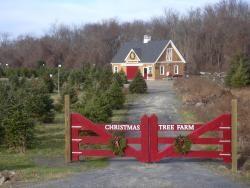 Clarks Christmas Tree Farm Nice Family Owned In Tiverton Ri Christmas Tree Farm Tree Farms Christmas Tree Lots