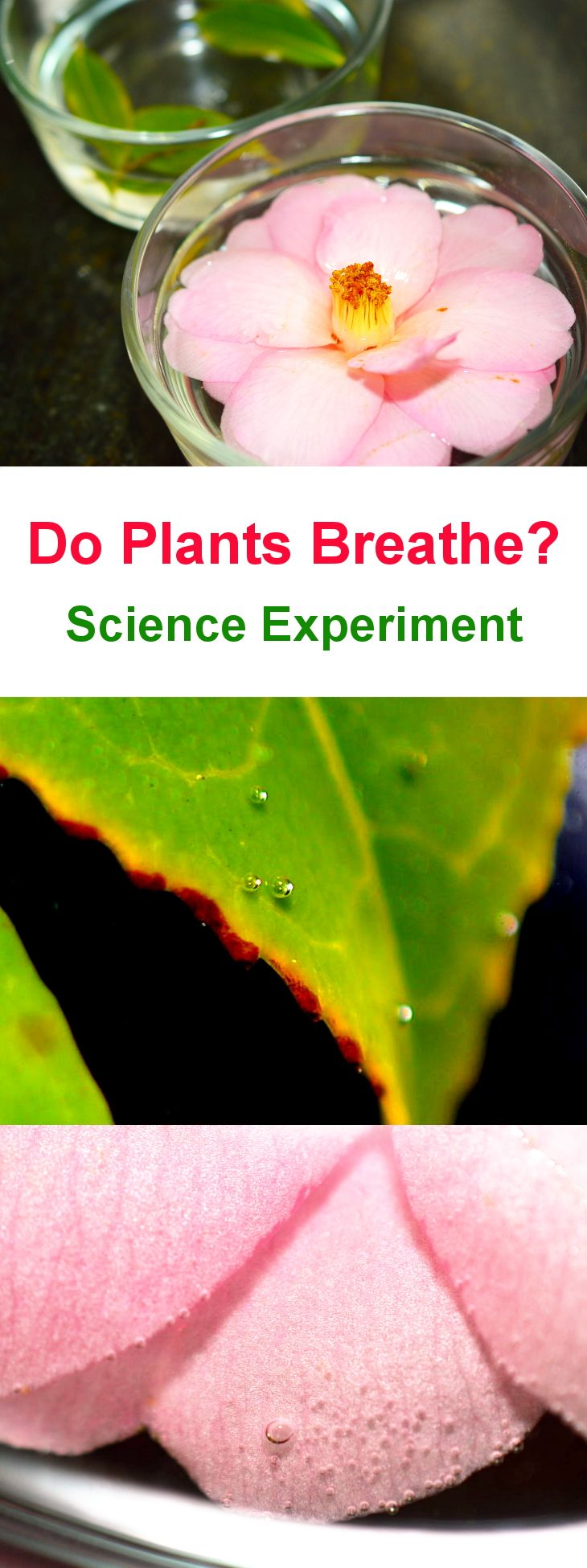Photosynthesis And Respiration In Plants Science