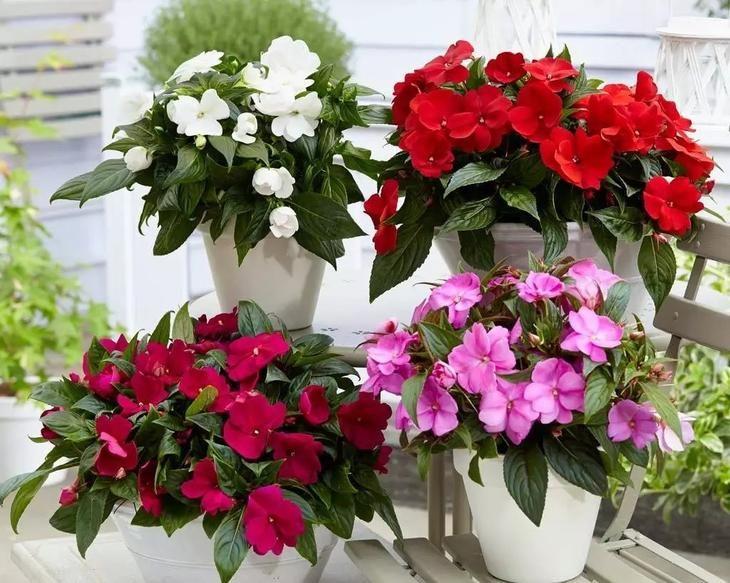 Комнатные цветы, цветущие круглый год   Комнатные цветы ...