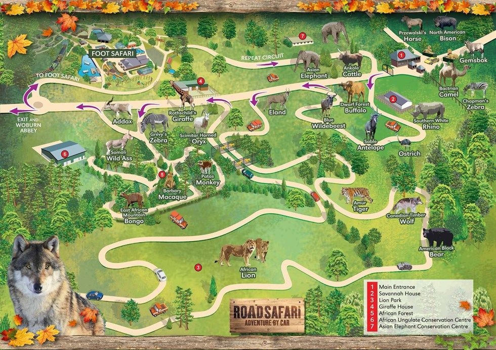 Woburn Safari Park Map Веб Зимняя дорога Сафари Карта 2014 15 | zoo | Zoo map, Map, Park Woburn Safari Park Map