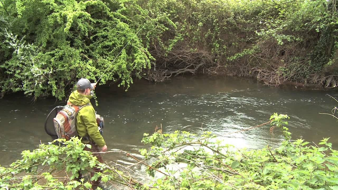 River Tone Somerset Fly Fishing River Fish