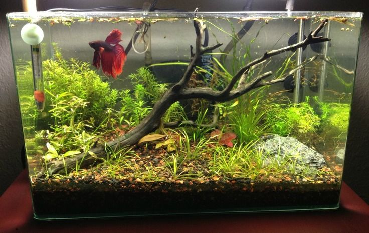 Betta Fish Tank Setup Ideas That Make A Statement Betta