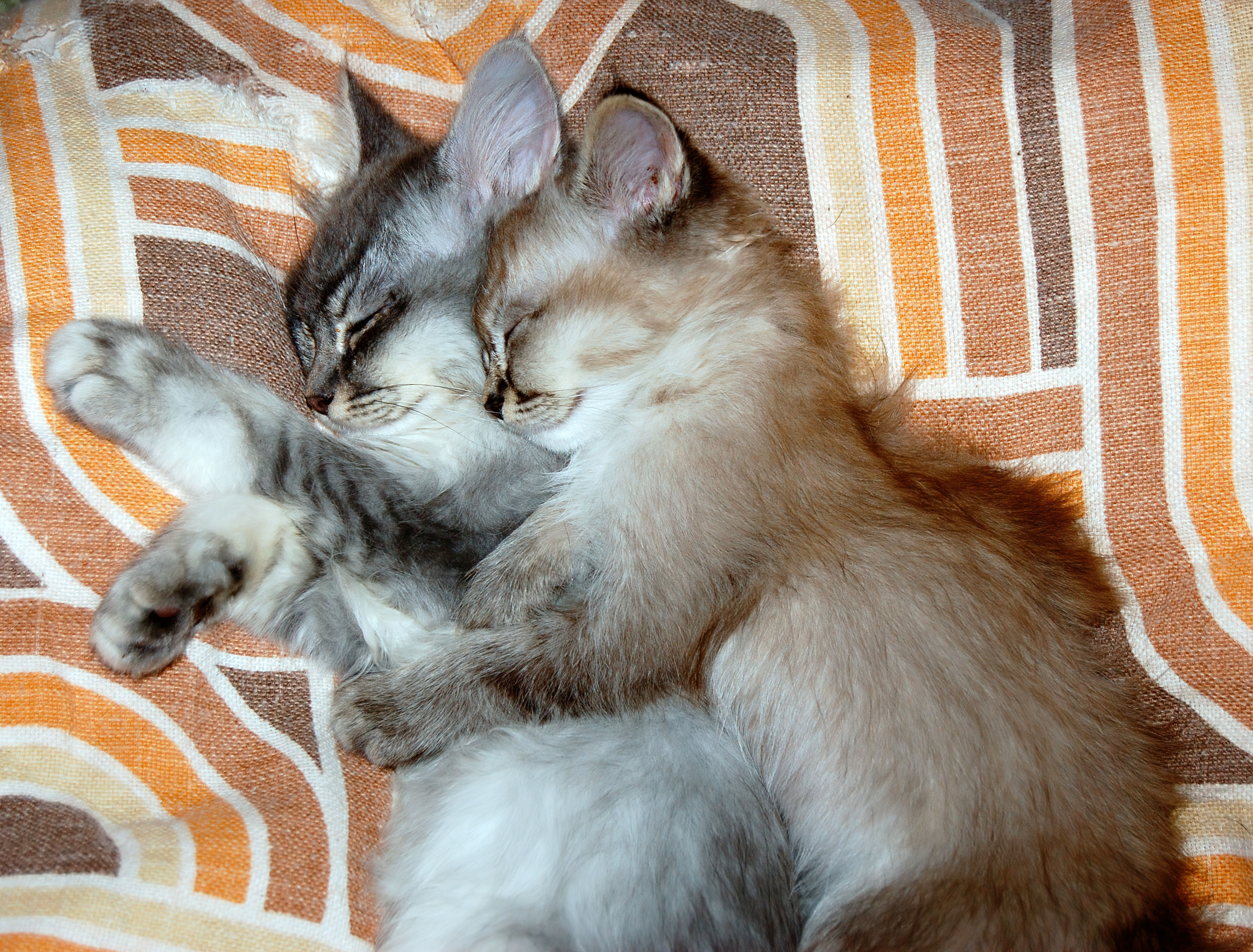 Allerpet Cat Dander Remover Cat Hug Kitten Cuddle Cat Dander