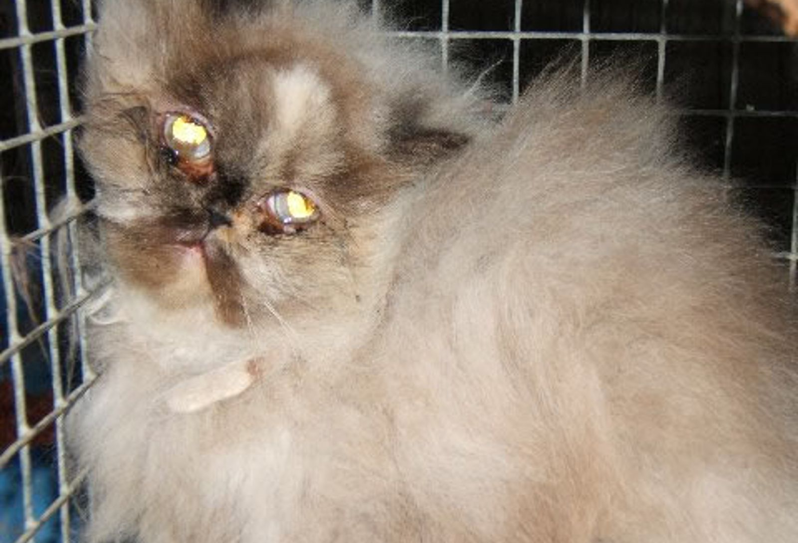 Heard About Puppy Mills Now Learn The Shocking Truth About Kitten Mills Kitten Puppies Puppy Mills
