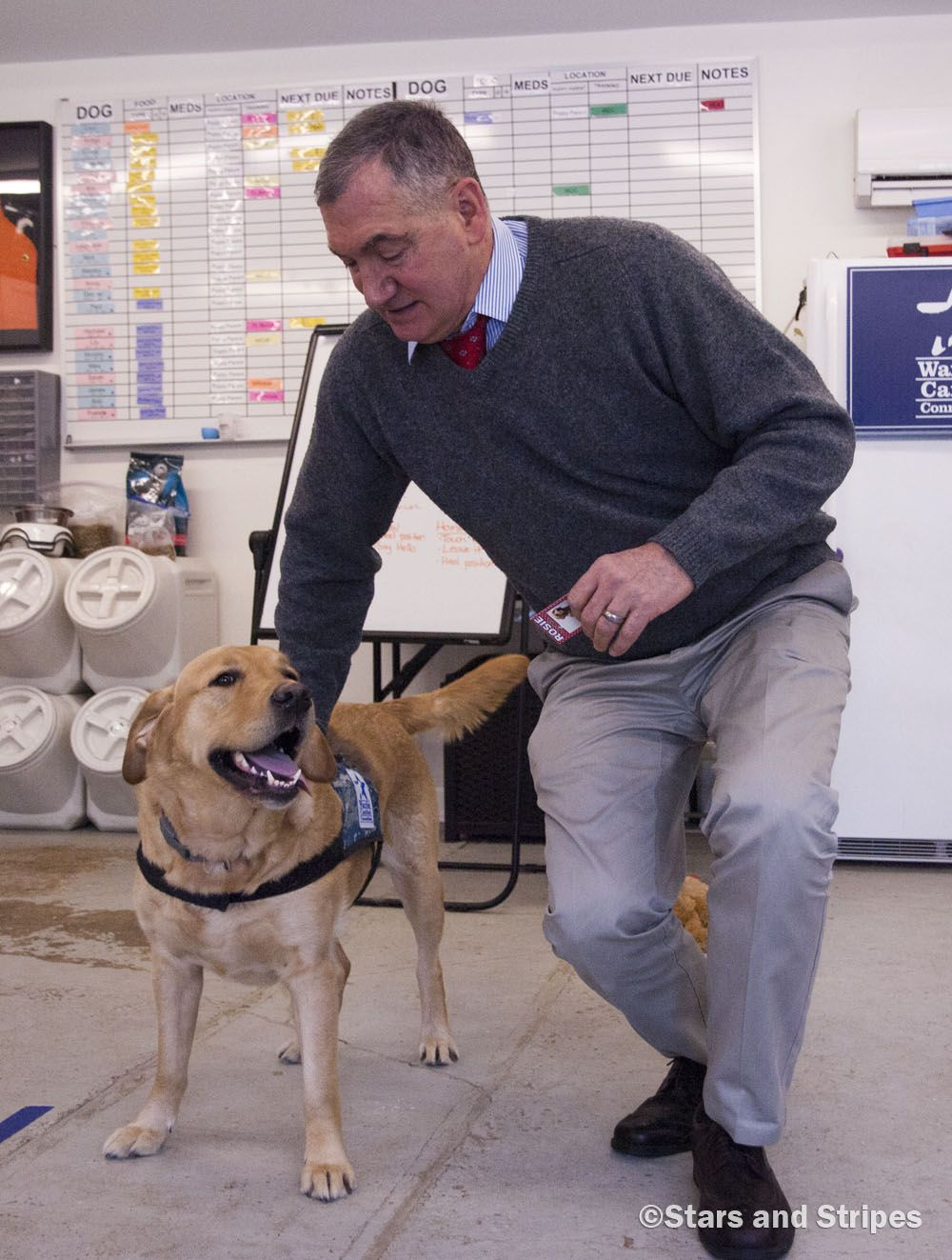 New Leash On Life Service Dogs Trained By And For Wounded