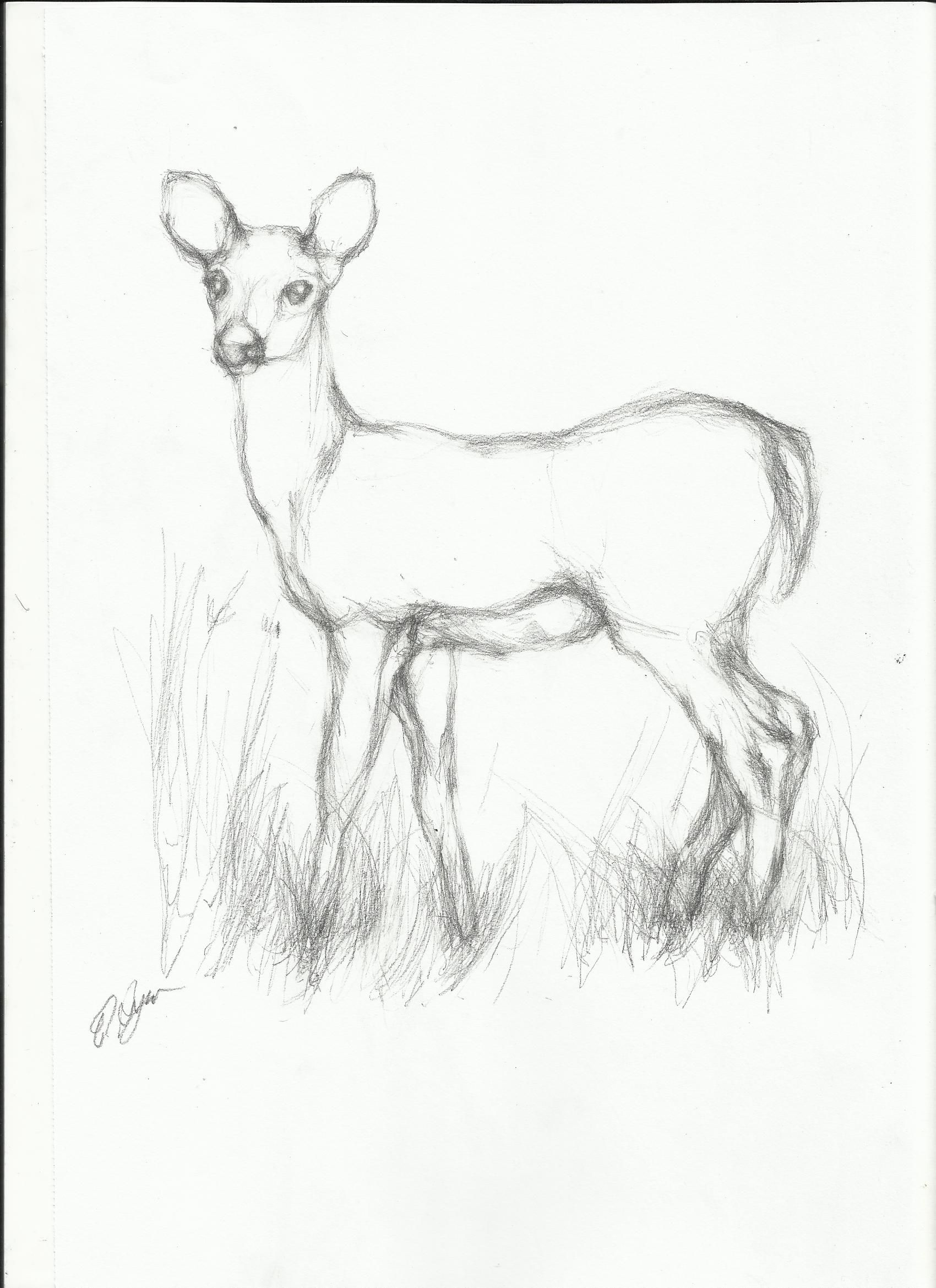 Line Art Drawing Easy : Simple line drawings of deer google search charcoal