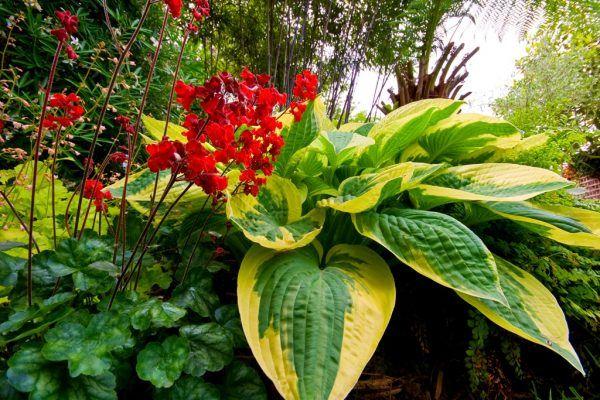 Тенелюбивые растения для сада | Растения, Клумбы, Сад