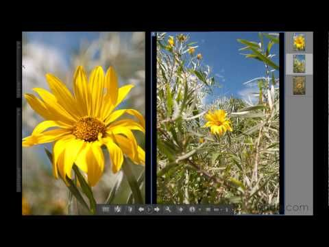 youtube photoshop elements 9 tutorials for beginners