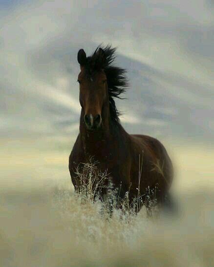 Pin Von Anna Auf Tiere 3 Wildpferde Hubsche Pferde Pferde