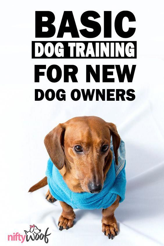 Basic Dog Training For New Dog Owners Dogs Dog Puppy Puppies