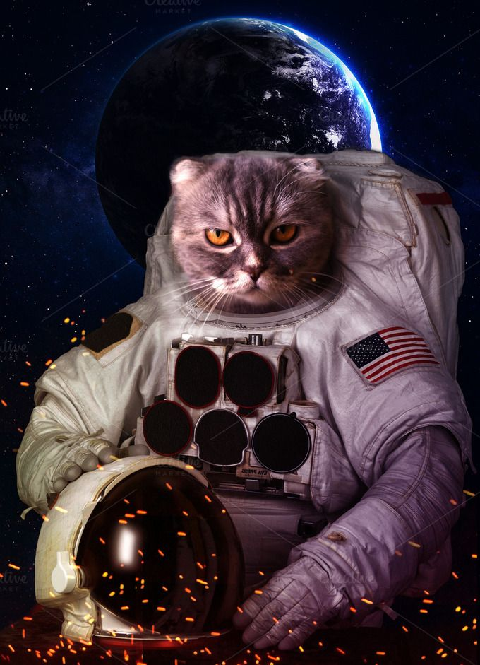 Beautiful cat in outer space. Elements of this image