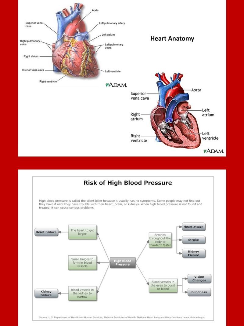 Heart Disease Charts And Diagrams With Private Label Rights 26 Heart Disease Charts And Diagrams That Communicate More Wi Disease Heart Anatomy Private Label