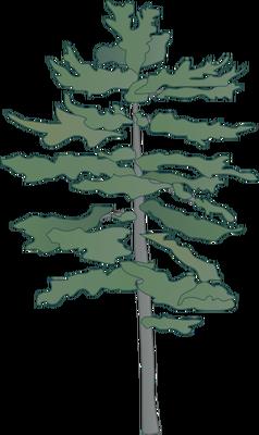Pin By Raiewate Herne On Onkwe Ta Onwehneha Pine Tree Drawing White Pine Tree Tree Drawing