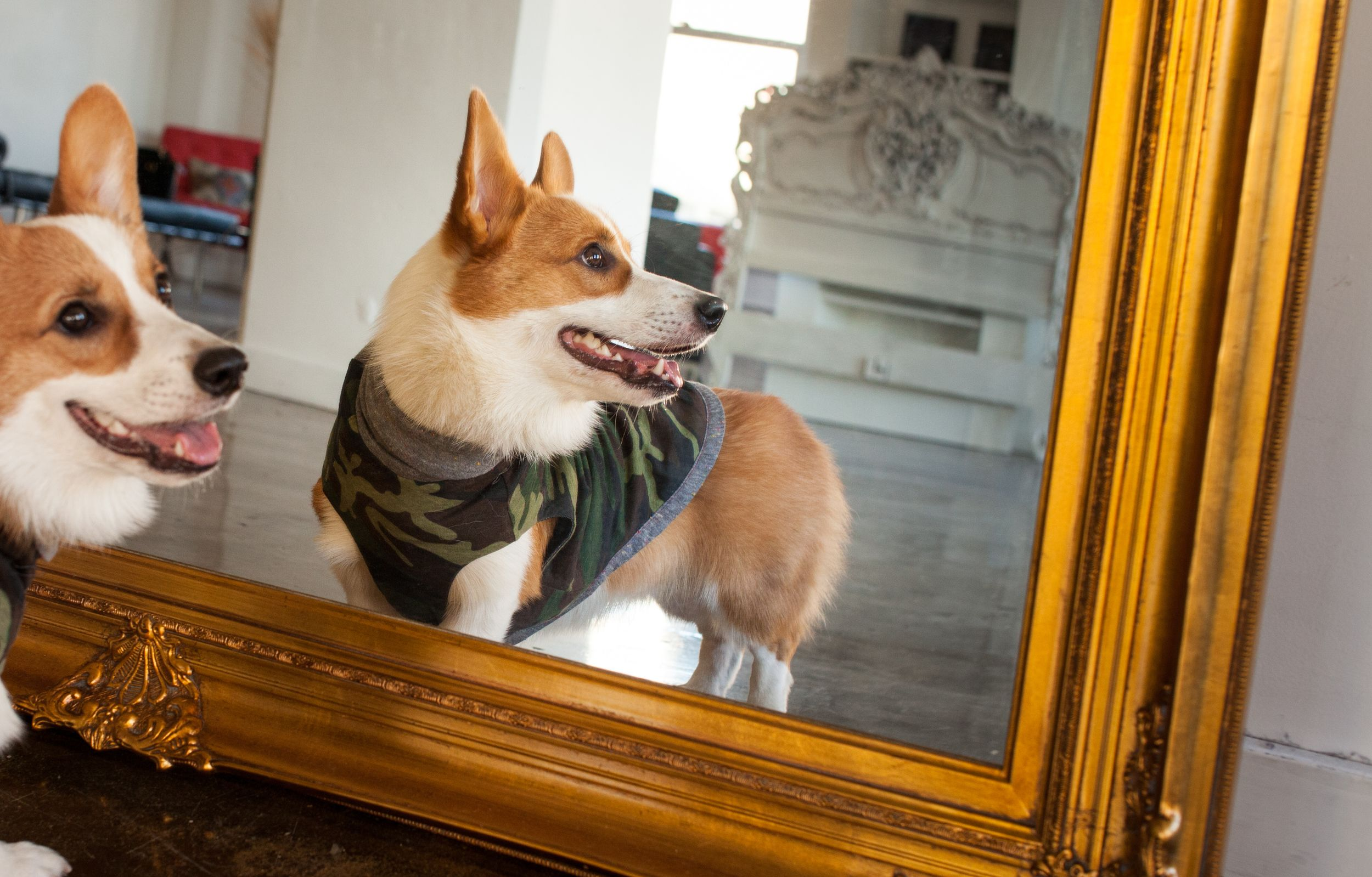 Find The Perfect Fit Use Our Sizing Chart Dogs Corgi Fur Babies