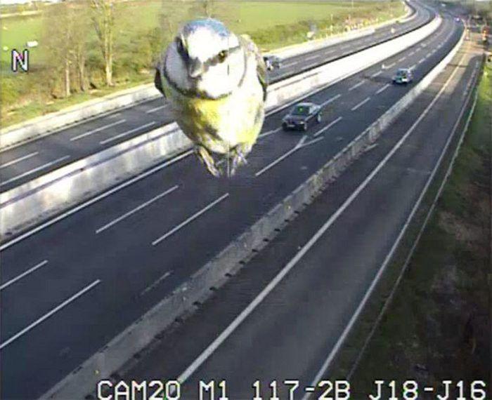 Un autovelox nel Regno Unito cattura l'immagine di un uccello troppo veloce