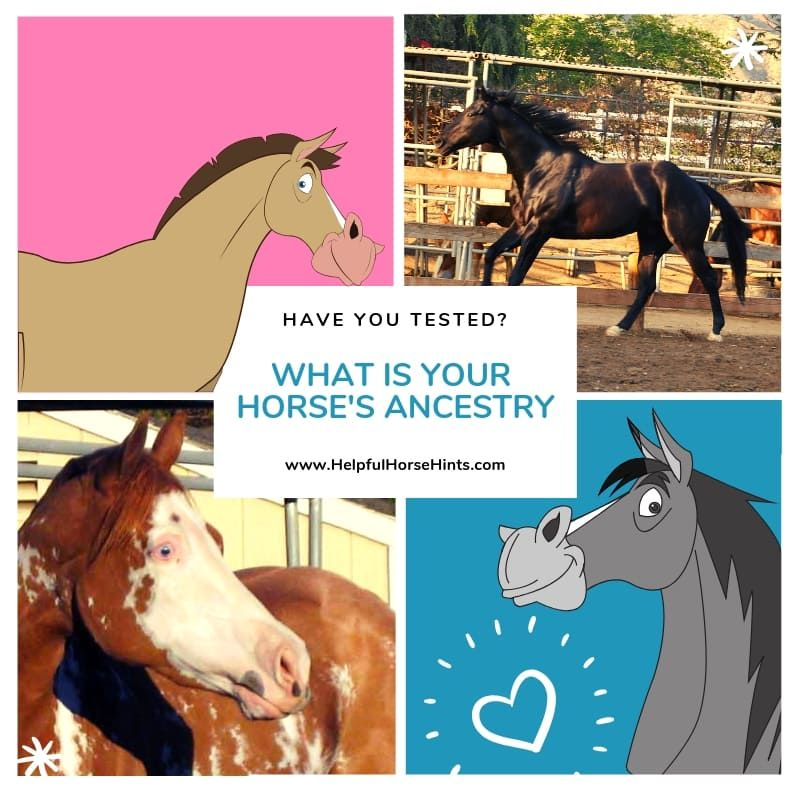 Horse DNA Testing: Guide to Labs and Available Tests ...
