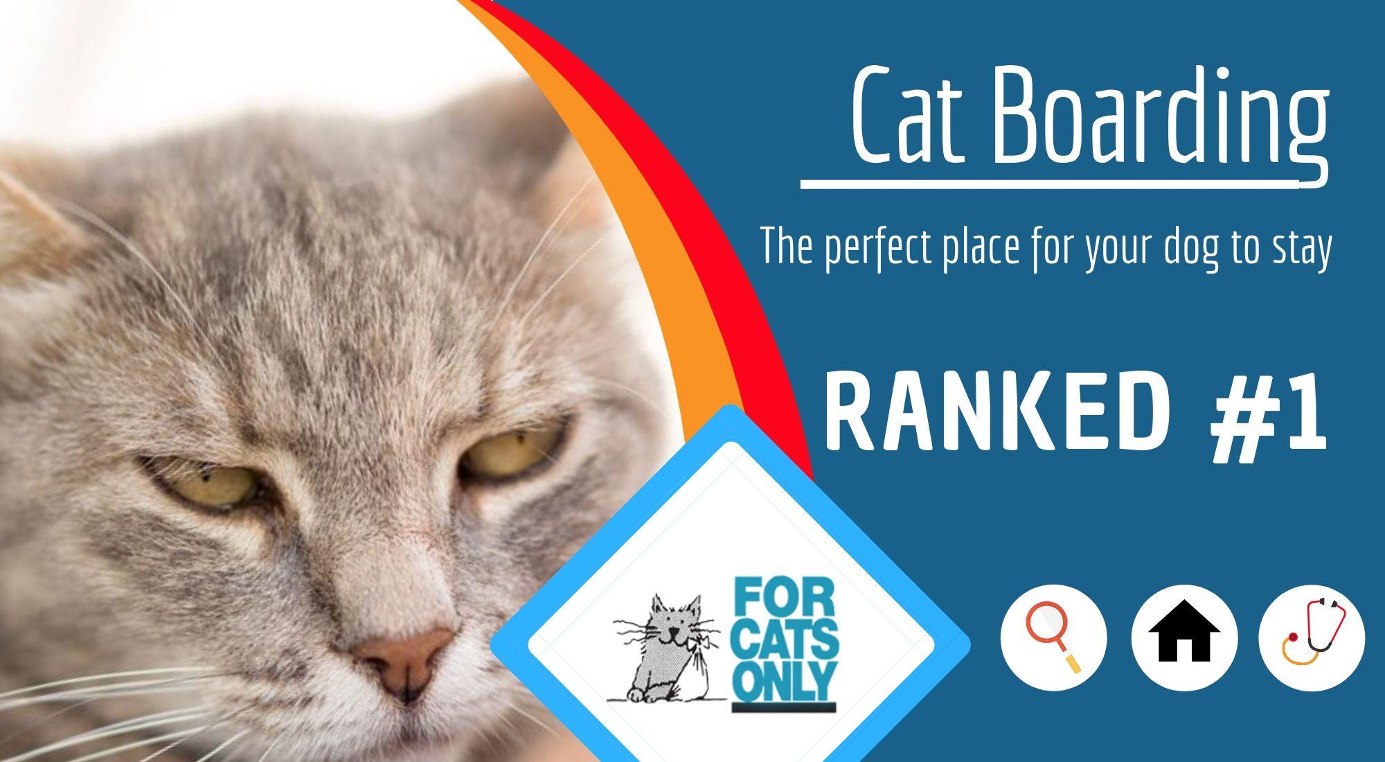 Choosing the right cat boarding facility cat boarding