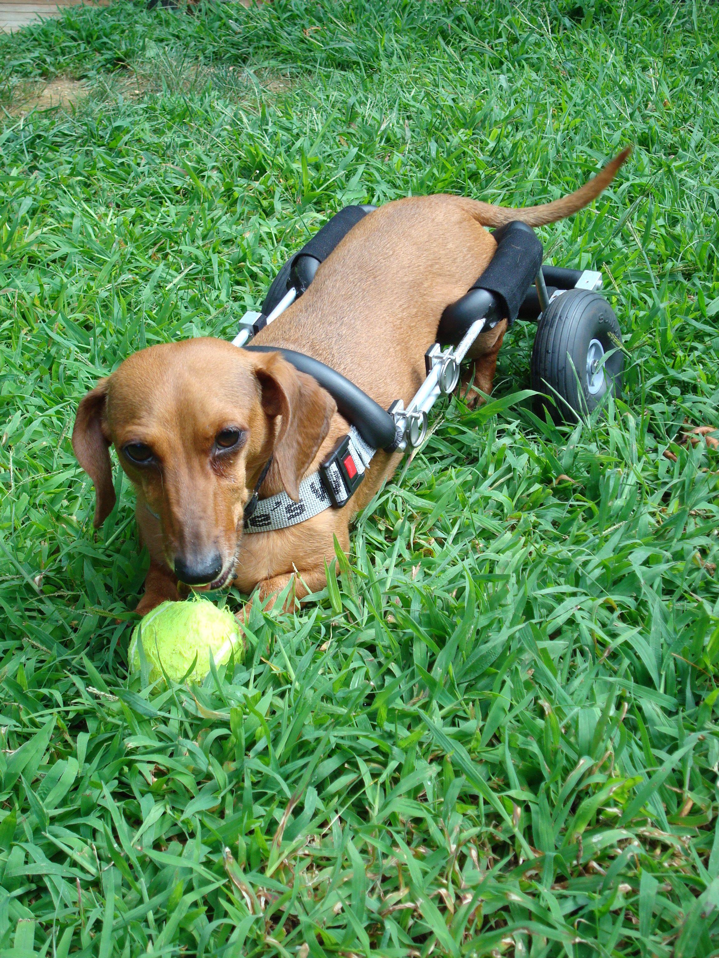 wheelchair dog church chair industries lanie s homemade ftempo