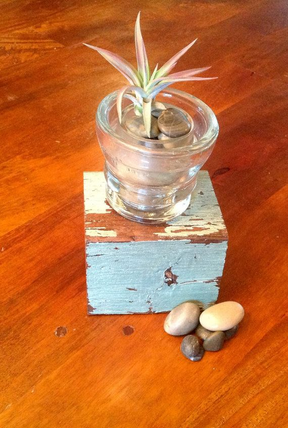 Vintage Insulator Home Decor with Air Plant Velutina Tillandsia and Reclaimed Lumber