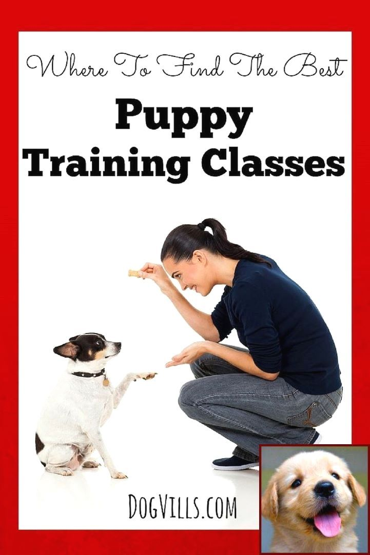 Dog clicker training where to start with clicker