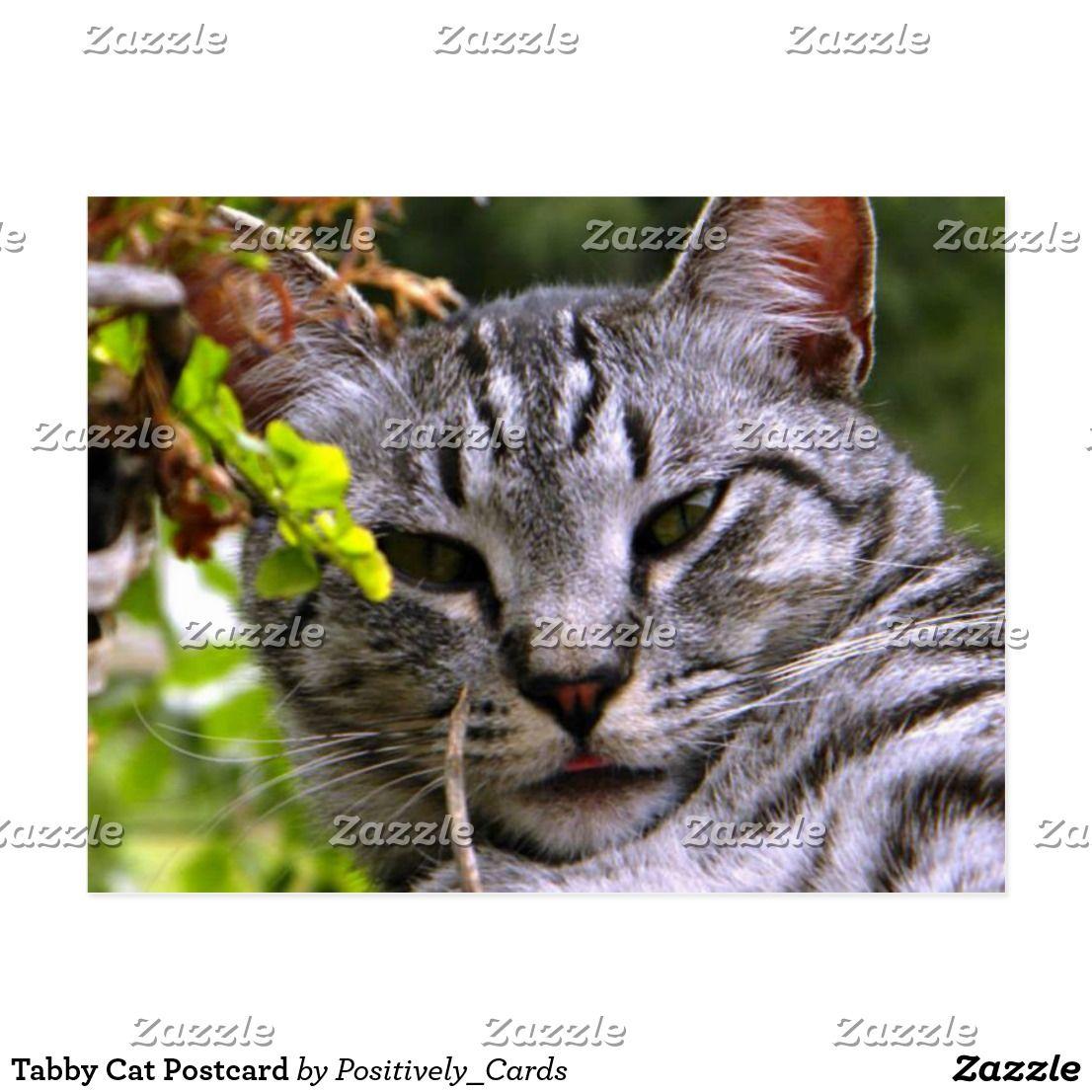 Tabby Cat Postcard Tabby cat, Postcard, Tabby